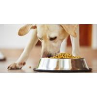 Как выбрать сухой корм для собак