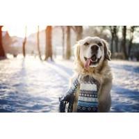 Как зимой защитить собаку?