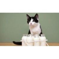 Стоит ли давать кошкам молоко?