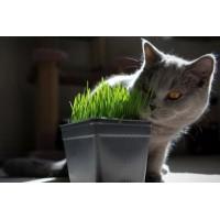 Почему кошкам надо есть траву?