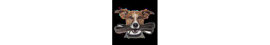 Купить амуницию для собак