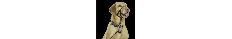 Для дрессировки собак