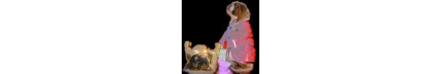 Ветиринарная аптека для собак